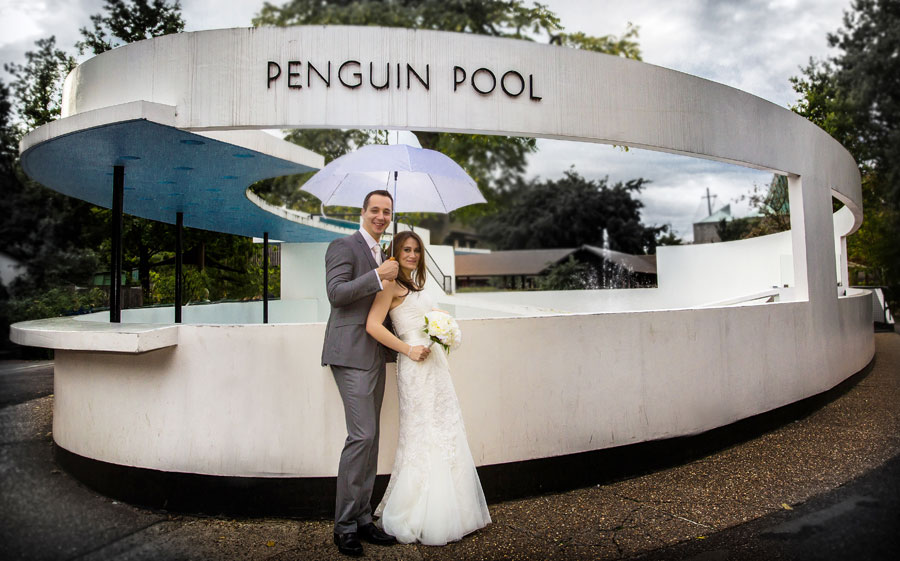 Wedding couple penguin pool London Zoo