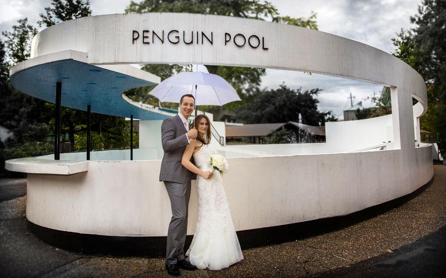 Wedding couple penguin pool London Zoo