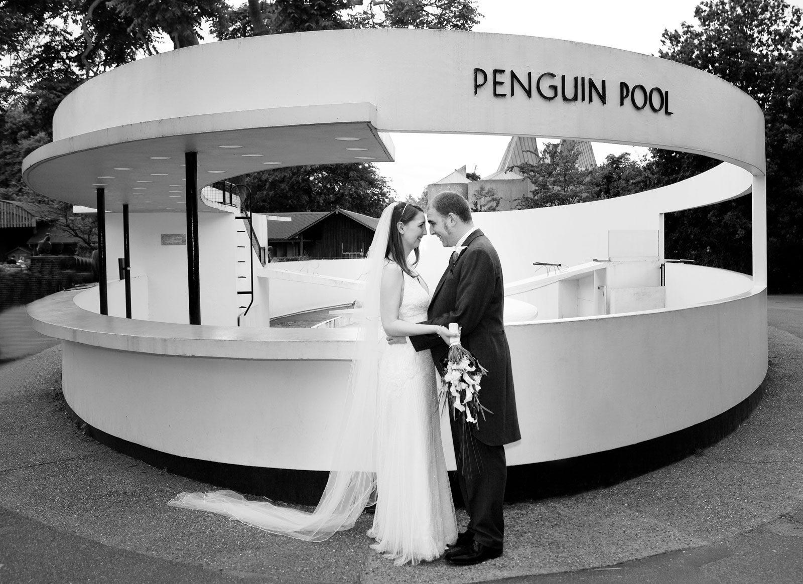 Penguin pool zoo weddings London