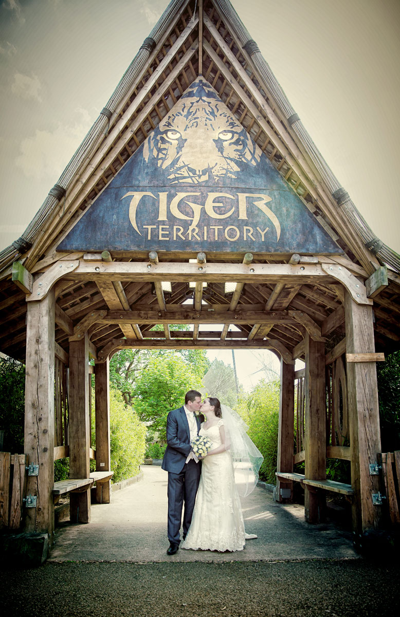 London Zoo wedding couple kiss outside the Tiger Territory enclosure